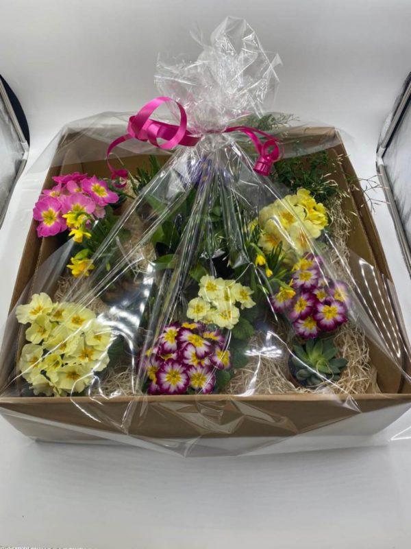 we dig you forever flowers drogheda